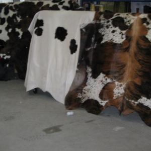 Koeienhuid