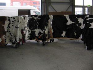 Koeienhuiden veel